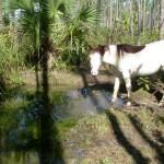 Screen-Shot-2011-11-23-at-11.26.10-AM